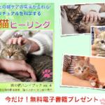 【号外 猫の飼い主さんへ】猫サンタからプレゼント